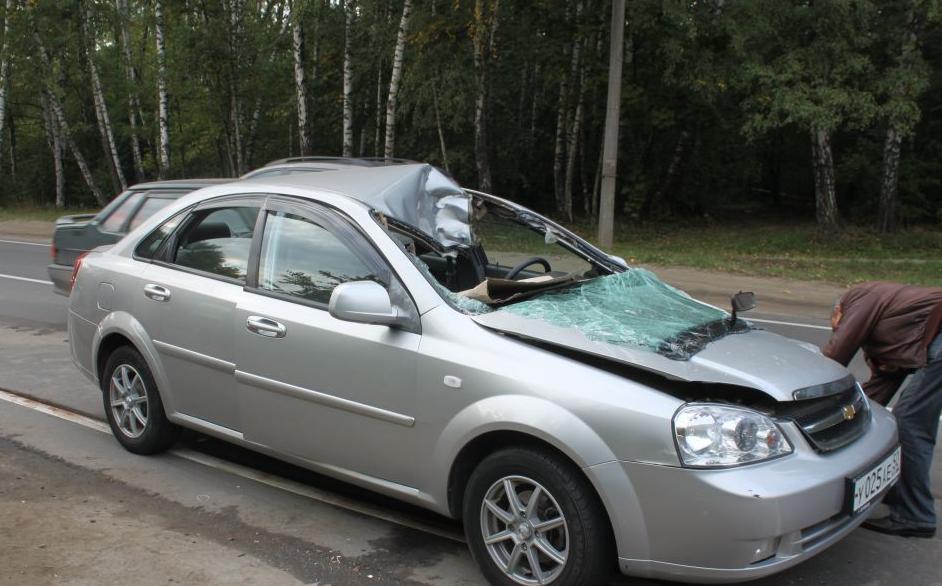QIP Shot Screen 754 В Москве произошла авария с участием лошади